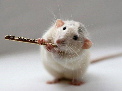 """Nghe hơi buồn cười nhưng """"chuột cắn"""" là một trong những nguyên nhân hàng đầu dẫn tới các sự cố hệ thống nước"""